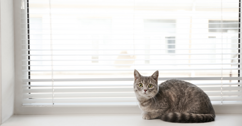 Should Your Cat Stay Indoors?