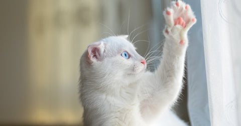 How To Protect Your Cat's Paws To Avoid Injuries