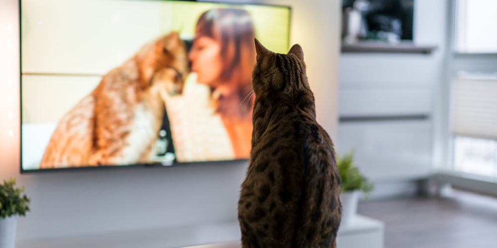 Can Electronic Screens Be Harmful To My Cat's Eyes?