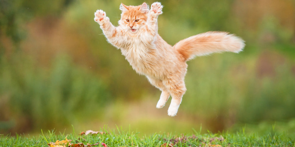 Surprising Facts About Outdoor Cats