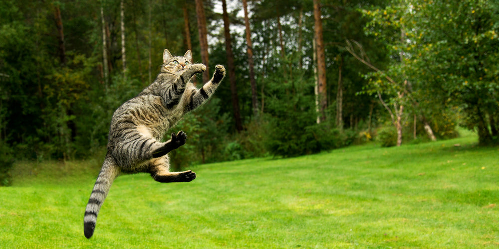 Myth Busters: Do Cats Really Always Land On Their Feet?