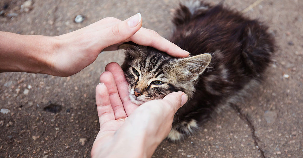 How You Can Help Cats in Need