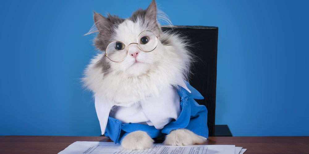 Can cats get jobs?
