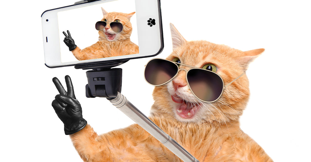 How to Make Your Cat a Social Media Star