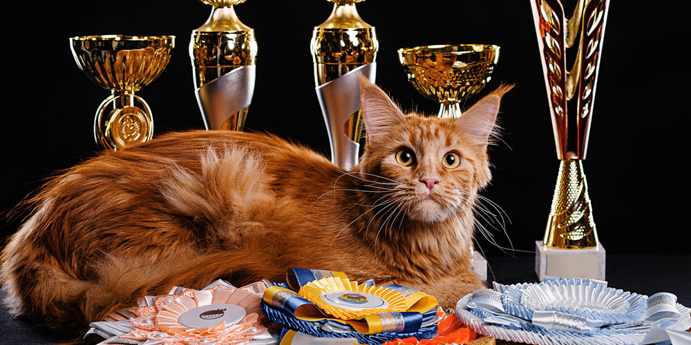 Cats that made it into the Guinness World