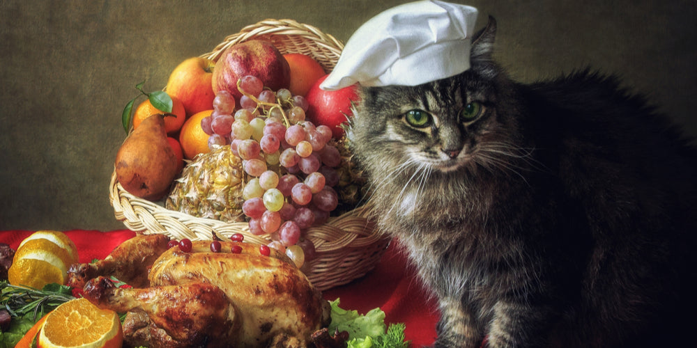 Easy Thanksgiving Recipe for your Cat