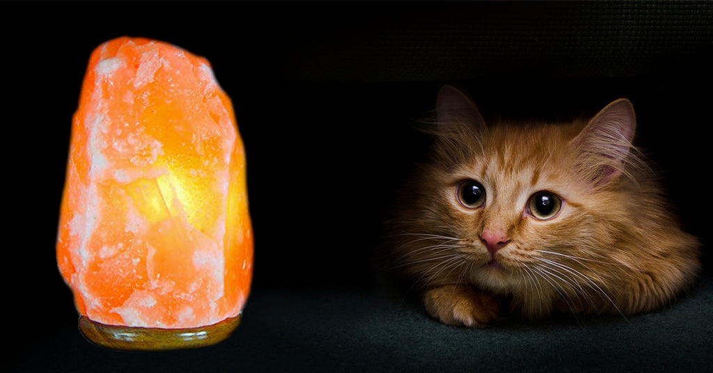 Salt Lamps Can be Dangrous for your Cat