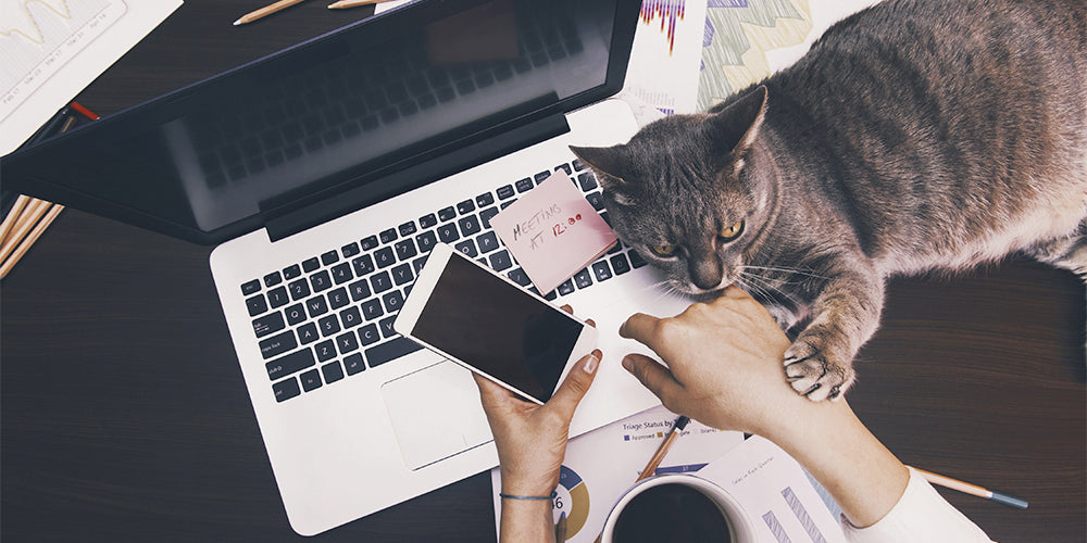 how to turn your cat into a social media icon
