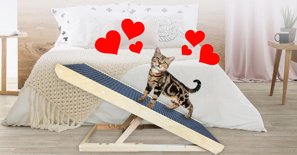 Why cats and their owners love the scratchy ramp
