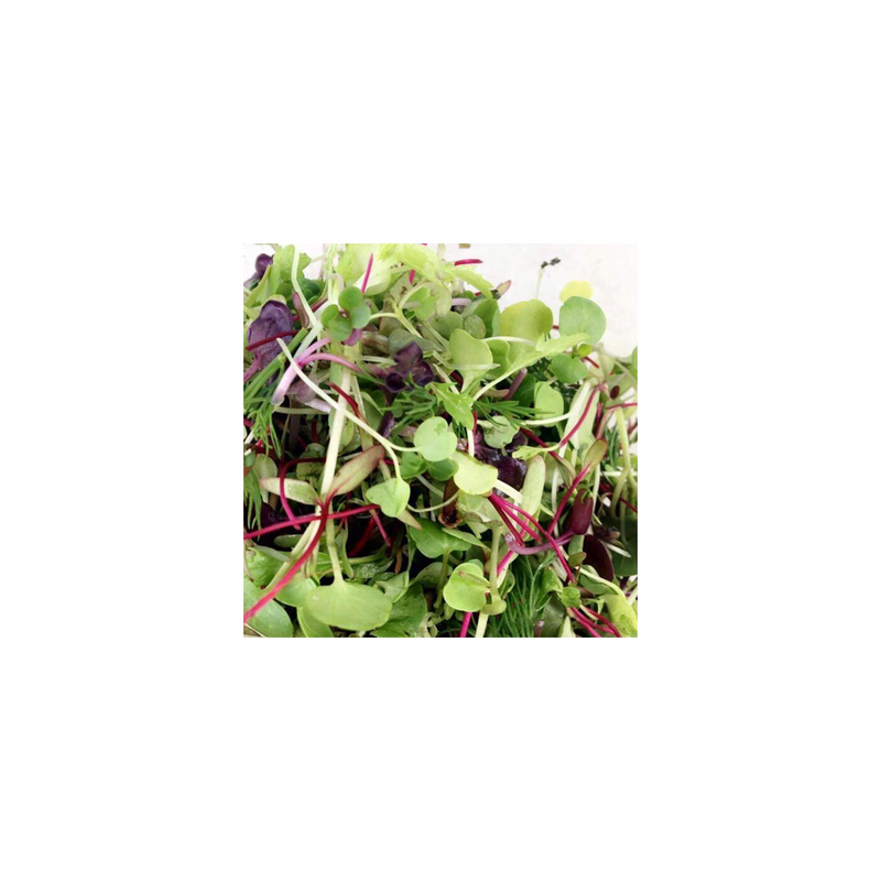 Microgreens (Mixed)