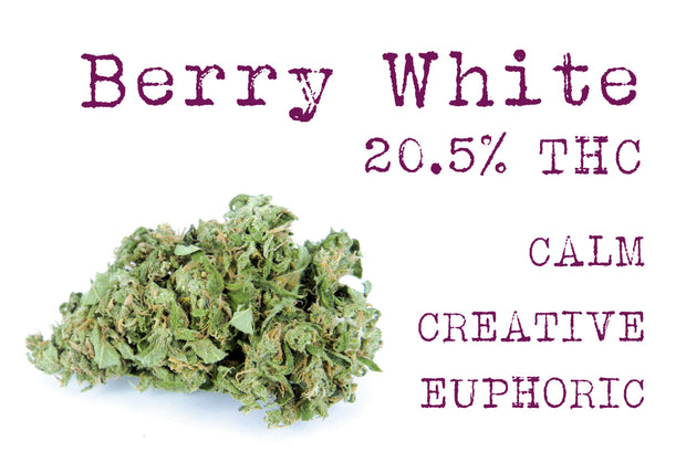 Berry White (Indica Hybrid)