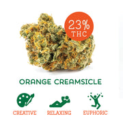 Orange Creamsicle (Hybrid)
