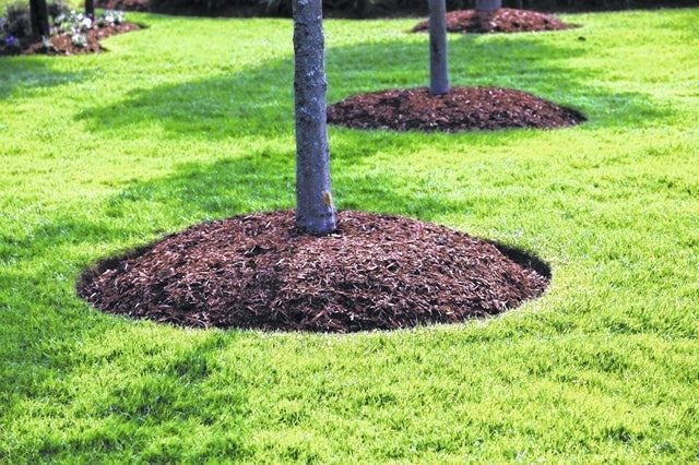 Why Mulching is Important for Trees
