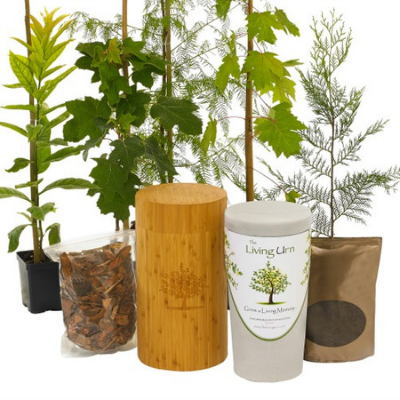Living Urn System With Bush Rose Seedling - The Living Urn Bio Urn