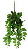 Heart Leaf Philodendron Hanging Creeper Bush 73cm