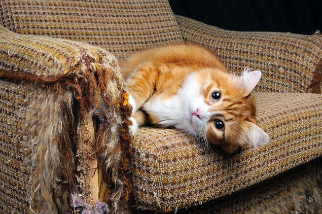 Help! My cat is ruining my furniture!