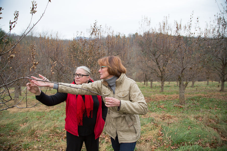 At Foggy Ridge Cider with Heirloom Apple Expert Diane Flynt