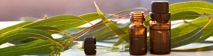 Eucalyptus Essential Oil Uses and Benefits in Canada