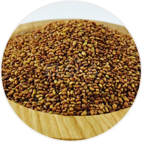 Alfalfa Seed Whole in Canada/USA at Bulk Wholesale Prices From Elska Naturals