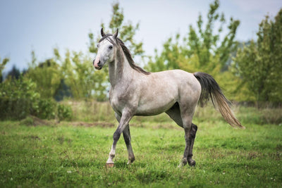 What is Equine Canker and How Can You Prevent It?