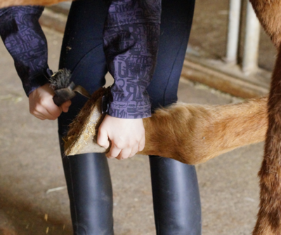 Transitional Hoof Care In Spring