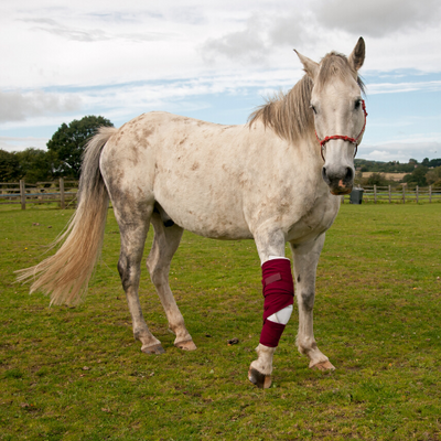 First Aid Essentials for Horses