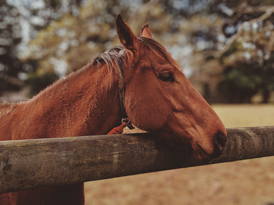 Money Saving Tips and Tricks For A Horse Owner