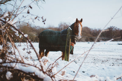 Are You and Your Horse Prepared for an Emergency?