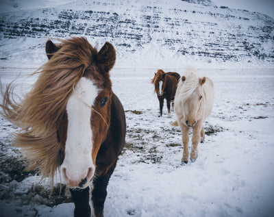 5 Activities To Do With Your Horse This Winter
