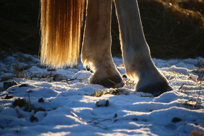 4 Common Winter Hoof Problems & How To Treat Them