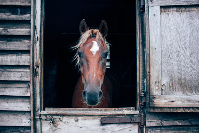 5 Winter Health Challenges For Horses