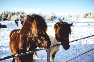 Laminitis Treatment in the Fall and Winter