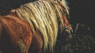 Horse Hair Care: Tips & Tricks For A Healthy Mane