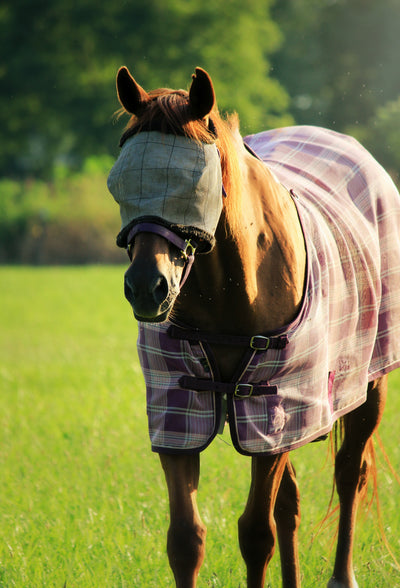 How To Prevent Pests From Harming Your Horse
