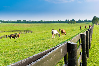 Is Your Pasture Ready for Summer?