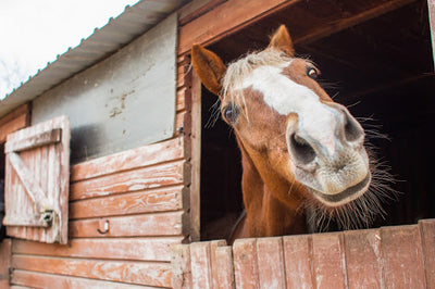 5 Tips To Keep Your Horse Healthy In The Winter Time