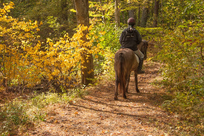 Why Fall Is The Best Season For Trail Riding