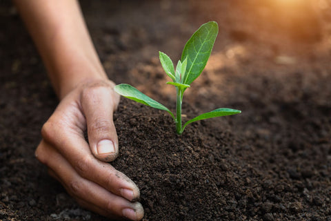 Person's hand in soil with plant