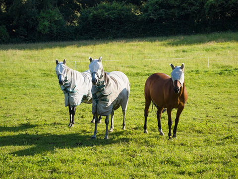 Horses covered in blankets