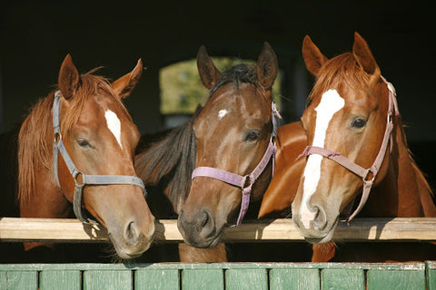 three horses in stable