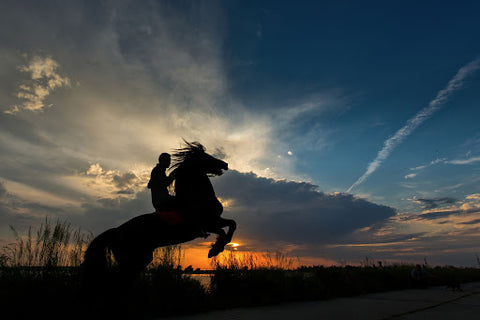 silhouette rider and horse on hind legs