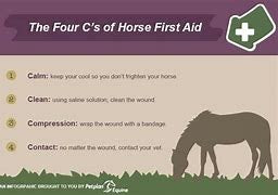 Make sure that your horse's tack box is properly stocked with an equine first aid kit in case of an emergency.