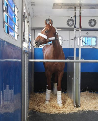 Visit the vet before you plan on traveling with your horse