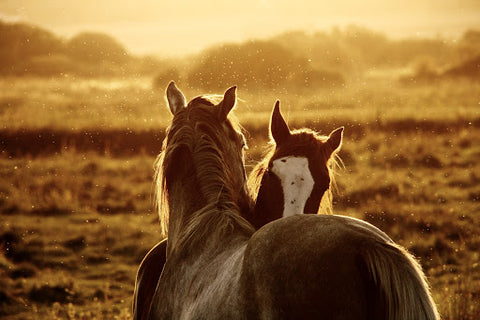 Any type of fly that bites (which includes, Horn, Horse, Deer, Blackflies and more) can leave bite marks on your equine that will cause not only severe itching and pain but be an annoyance as well.