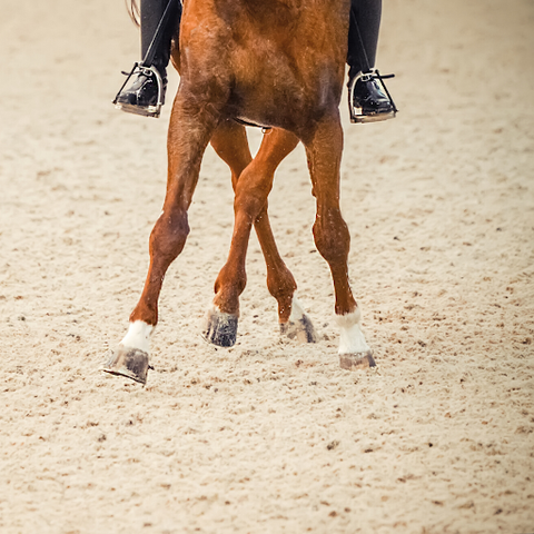 Exercise and keeping your horse active is very important during the winter months.