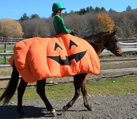 Horse and rider dressed for halloween