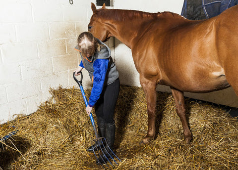 Take the time to clean your horses' buckets, and their stalls.