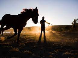 Horse and trainer