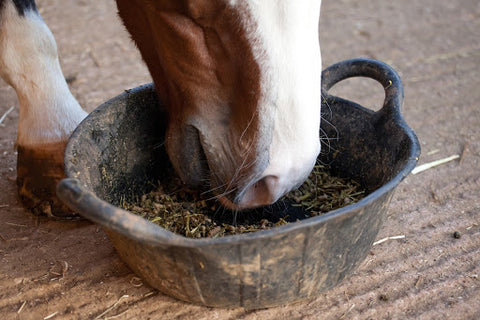 Horse eating feed