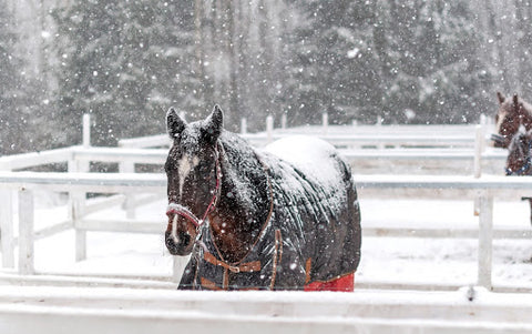 Horse with a blanket on covered in snow